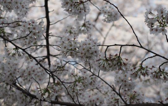 サボりすぎまして、春です