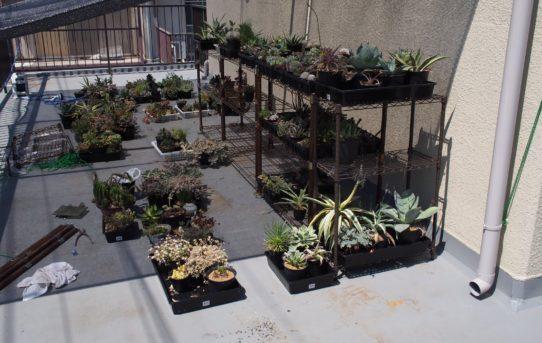 温室作り Part.1