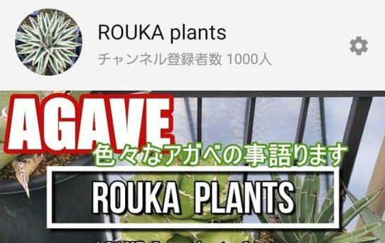 「ROUKA plants」が、チャンネル登録者数 1000人になりました!
